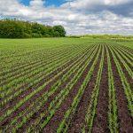 В Татарстане выделят дополнительные средства на удобрения