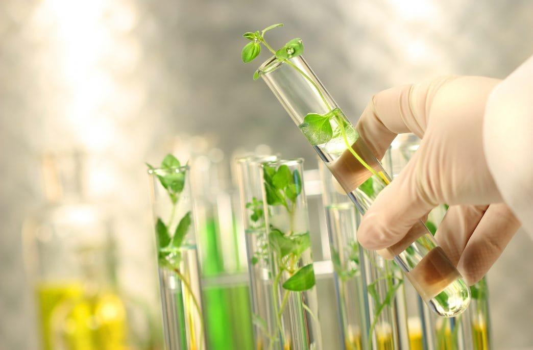 Biotalys получила грант для разработки биопестицидов