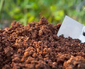 Ученые РУДН изучили влияние удобрений на углерод в почве