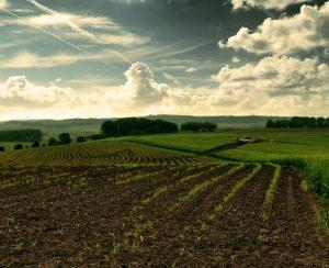 В Краснодарском крае хотят повысить плодородие земель