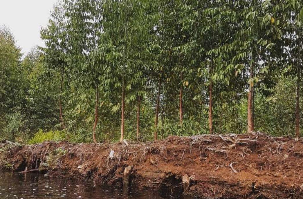 В Индонезии найден старейший торфяник в мире