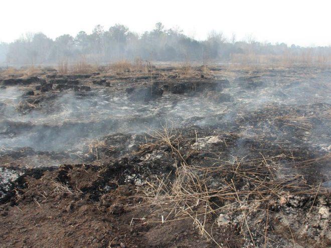 Ученые изучили пожары на торфяниках