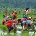 На Шри-Ланке фермерам раздадут удобрения