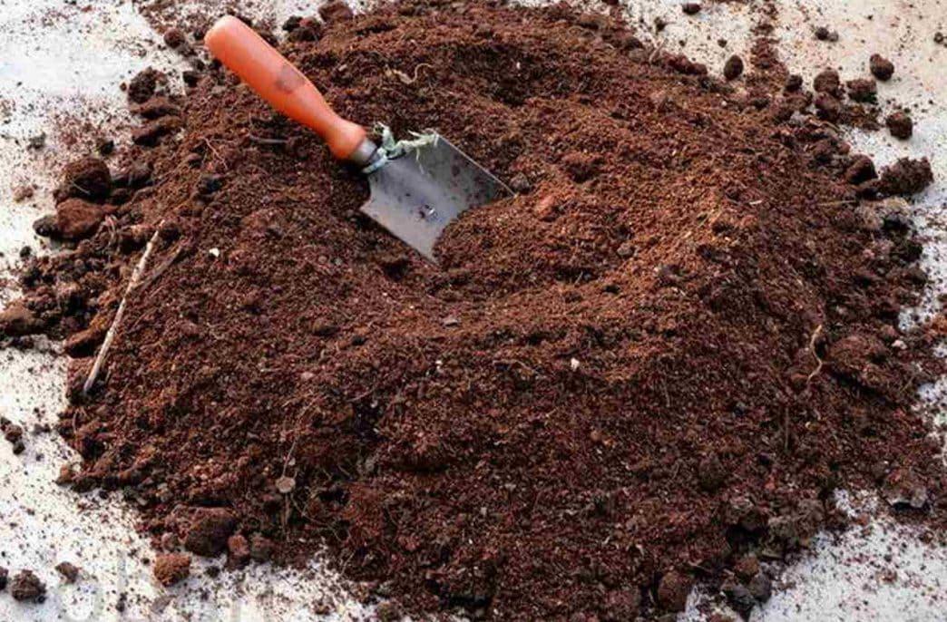 В Тамбовской области возобновится добыча торфа