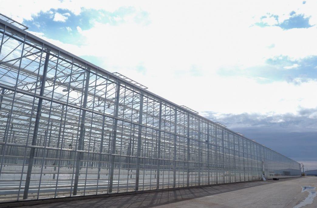 В Оренбургской области откроют новый тепличный комплекс