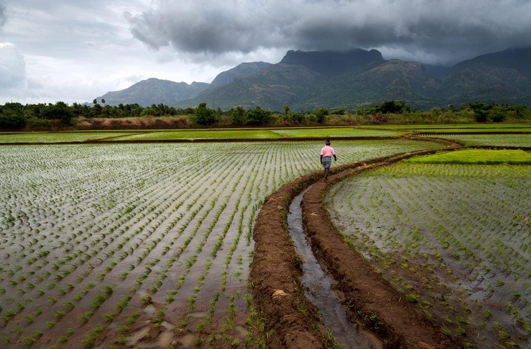 Власти Индии выделят дополнительные субсидии на агрохимикаты