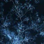 Ученые отделят микоризу от растений