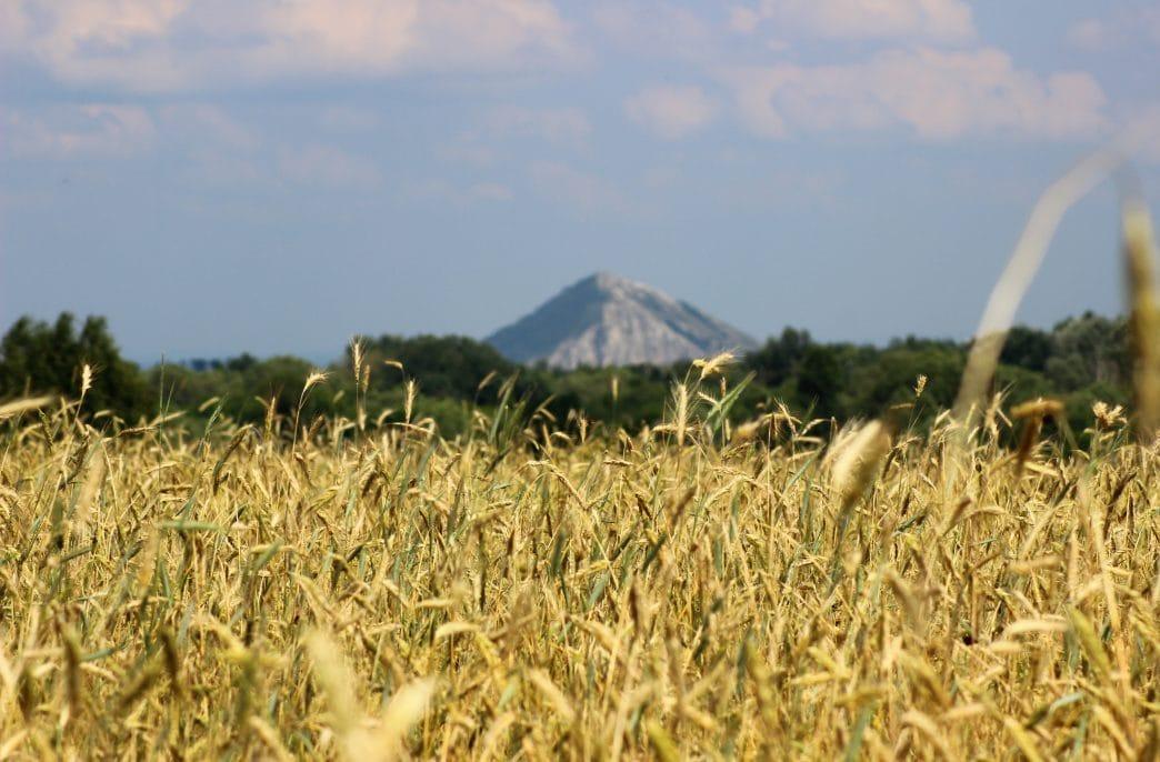 В Башкортостане поставлен рекорд по внесению агрохимикатов