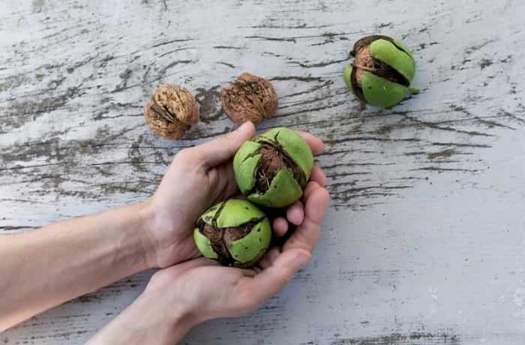 Чем подкормить грецкий орех весной, летом и осенью