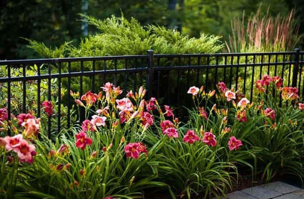Чем подкормить лилейники перед цветением и после