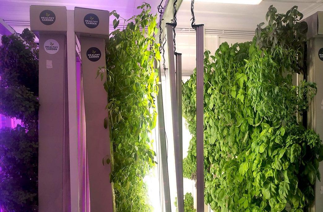 Резидент «Сколково» внедряет вертикальные фермы будущего