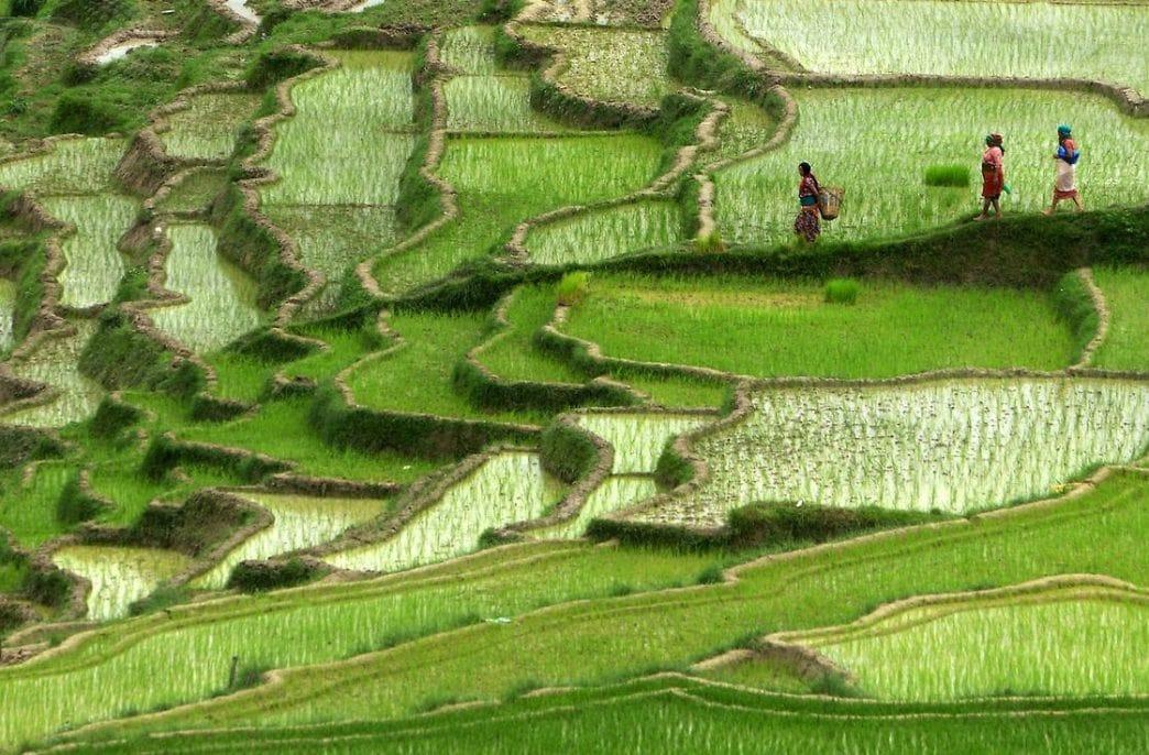Непалу все еще не хватает агрохимикатов