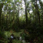 Ученые изучили влажность торфяных лесов