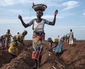 В Нигерии пересчитали фермеров