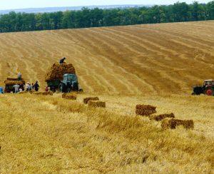 В Молдове снизят НДС для агрохимикатов