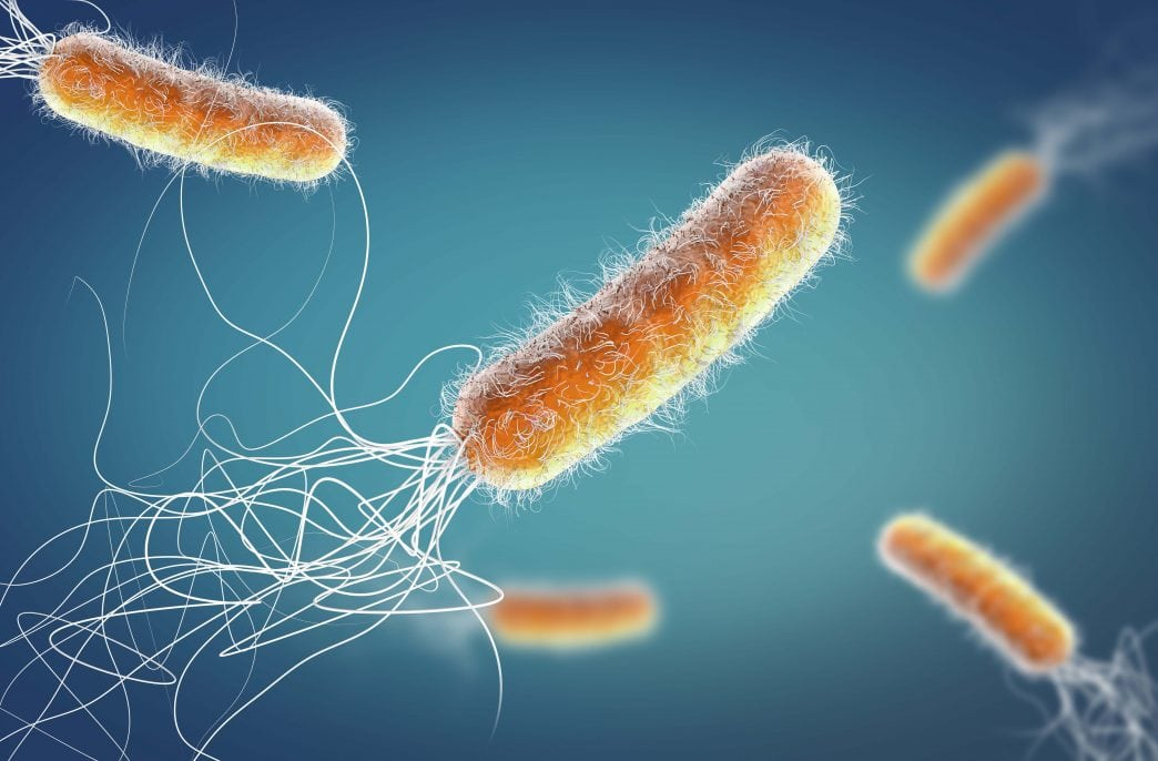 Бактерии очистят почвы от меди