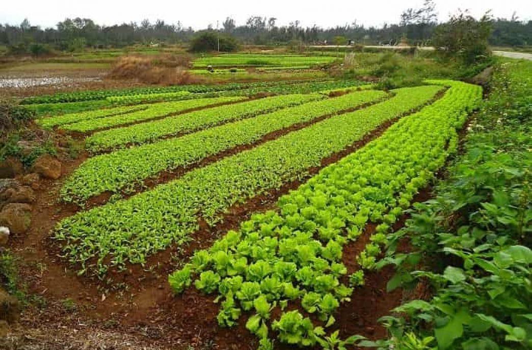 Лучшие сидераты для огорода: когда сеять и когда закапывать