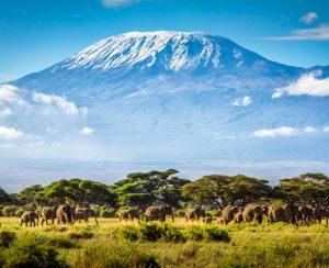 В Танзании тормозится строительство огромного завода