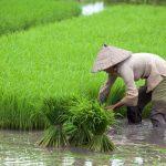 Во Вьетнаме прогнозируют рост спроса на агрохимикаты