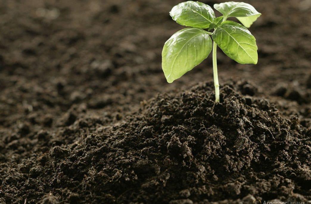 В Новгородской области будут производить удобрение из сапропеля