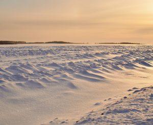 В Рязанской области готовятся к весеннему севу