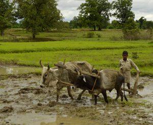 В Индии предложили поднять цены на карбамид