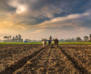 В Индии измерили уровень атмосферного аммиака