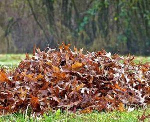 Как сделать компост из листьев