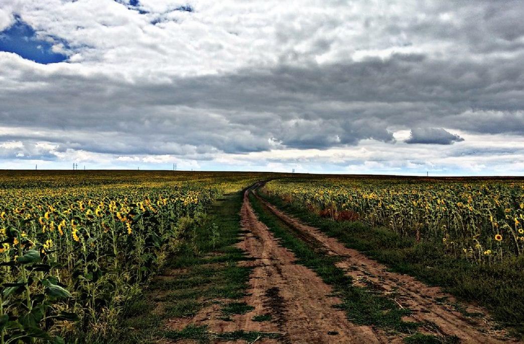 Для весеннего сева в Ростовской области закупят 207 тыс. тонн агрохимикатов