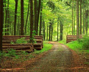 В США вырастили искусственную древесину