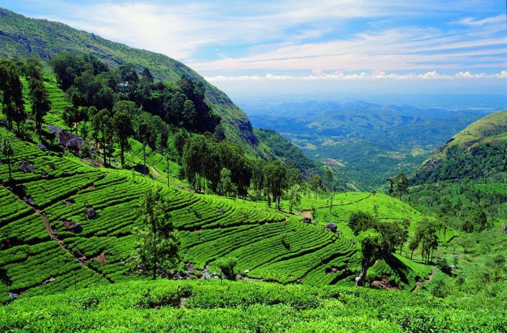 Шри-Ланка изучает возможности для выпуска карбамида