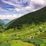 Непал получит от Бангладеша 50 тыс. тонн карбамида
