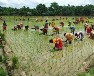 Ma'aden обеспечит Бангладеш диаммонийфосфатом