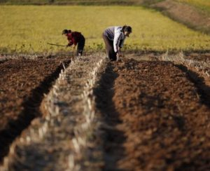 КНДР страдает от кислотности почв