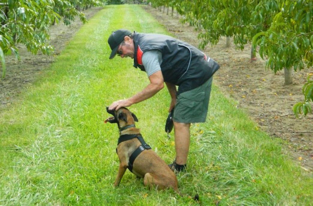 Собак научат выявлять проблемы у растений