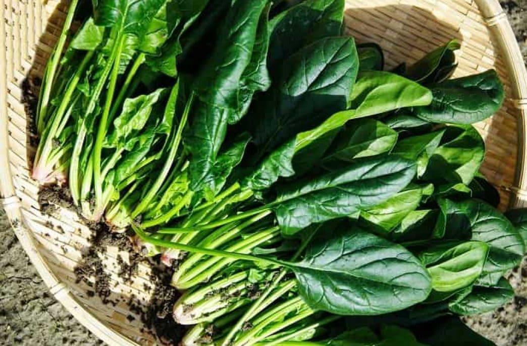 Как вырастить шпинат в открытом грунте