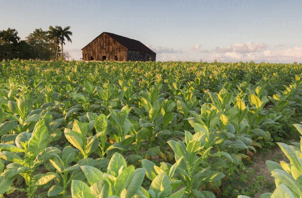 Куба увеличит выпуск биологических препаратов