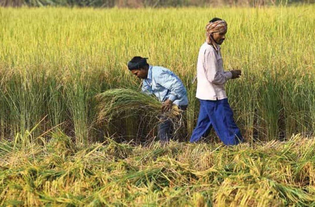 Пакистанские фермеры готовятся к забастовке