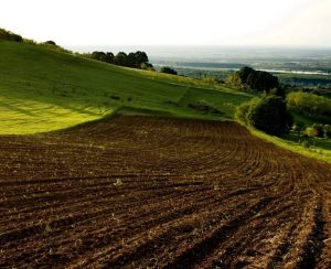 Весенний сев в Башкортостане заметно подорожал