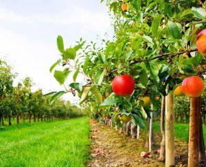 В Москве обсудят перспективы российского садоводства