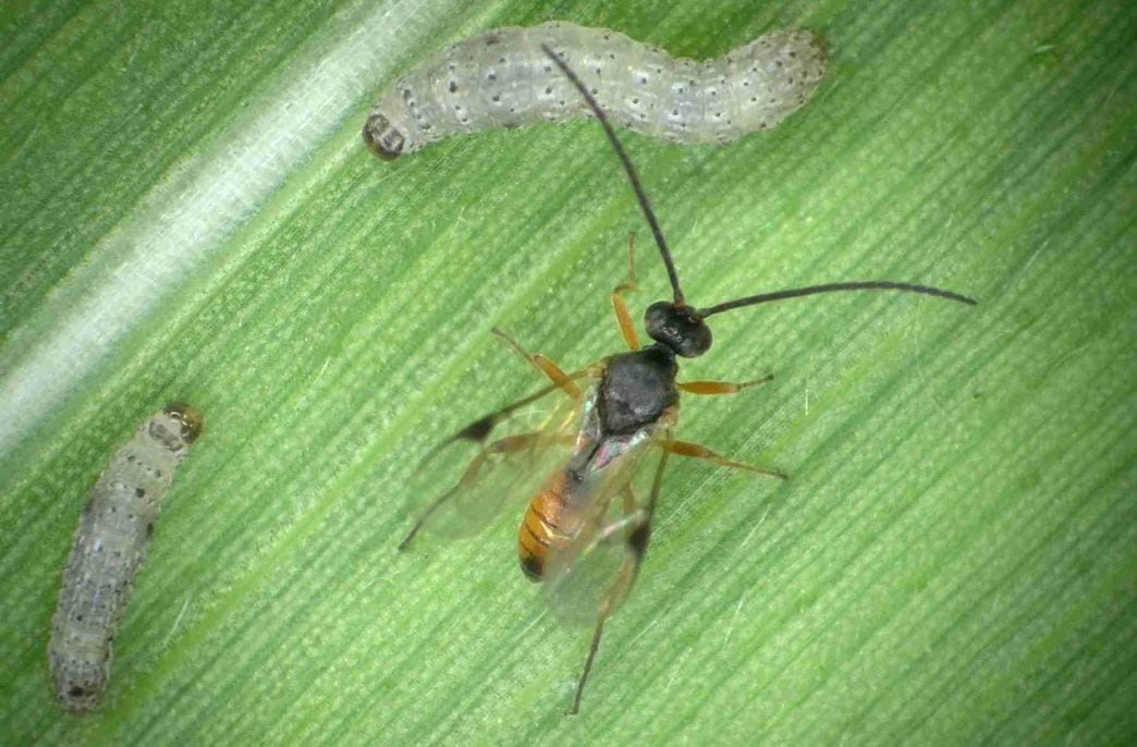 Viewpoint переключилась на полезных насекомых