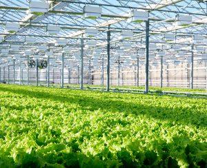 В США построят Agriculture Technology Campus