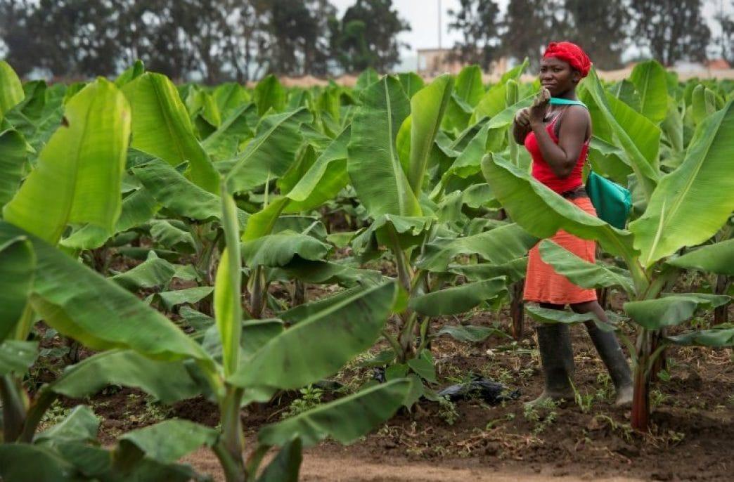 Minbos Resources готовится к добыче на Cabinda