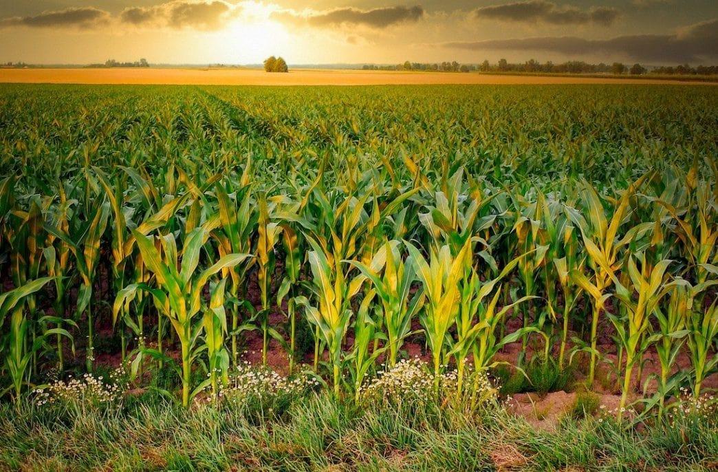 Mosaic и Sound Agriculture разработают революционный продукт
