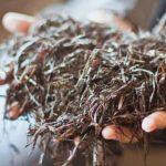 Рецепты приготовления компоста для выращивания шампиньонов в домашних условиях