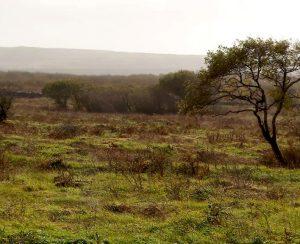 Ирландия озаботилась защитой торфяных почв