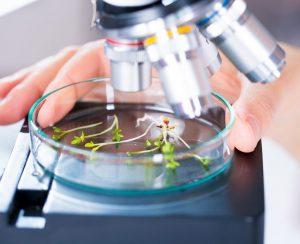 Ученые создали систему мониторинга стресса растений