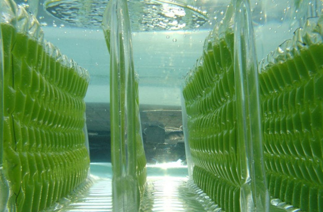 Ученые изучили потенциал микроводорослей