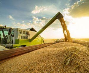 Погрузка зерна на сеть РЖД растет и уже падает