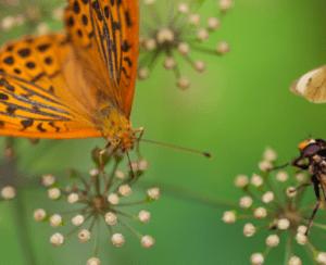 Ученые оценили вред современных пестицидов